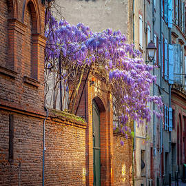 Spring Wisteria in Toulouse by W Chris Fooshee