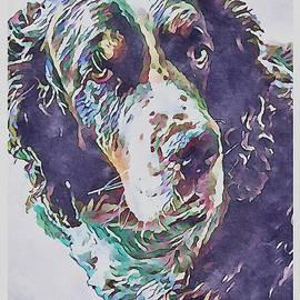 Springer Spaniel Dog by Meredith Amon
