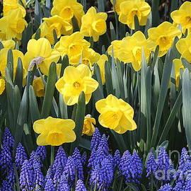Springtime Beauties by Dora Sofia Caputo