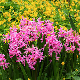 Springtime Garden by Denise Harty