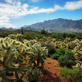 Springtime In The Desert  by Saija Lehtonen