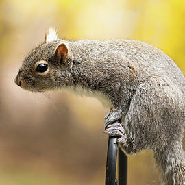 Squirrel  by Amelia Pearn
