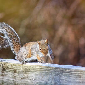Squirrel Discovers Snow Is Cold by Laura Vilandre