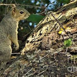 Squirrel In The Woods            July          Indiana by Rory Cubel