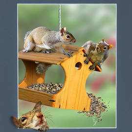 Squirrel Trouble by Christopher Haire
