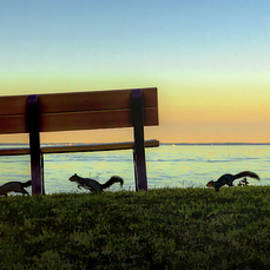 Squirrelly Park Bench Pano by Brian Wallace