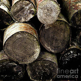 Stacked Firewood by Doc Braham