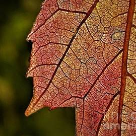 Stained Glass Maple by Shari Stamford Krause