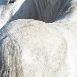 Stallion Beauty by Barbara Sophia Travels