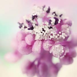 Stamen Pearls by Sharon Johnstone