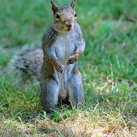 Standing Squirrel by Ray Christian