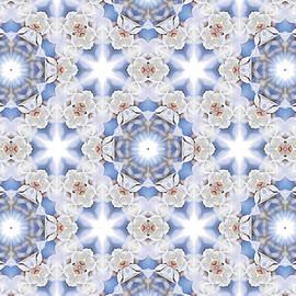 Star Magnolia Kaleidoscope 3 by Maria Keady