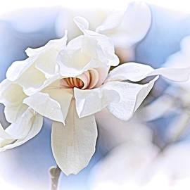 Star Magnolia by Maria Keady