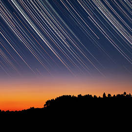Star Trails over Tree Silhouettes by Alexios Ntounas