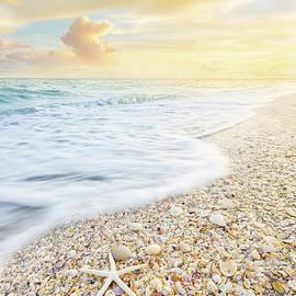 Starfish And Seashells by Jordan Hill