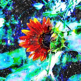 Starry Skies Sunflower by Pamela Smale Williams