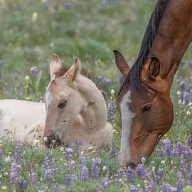 Staying Close to Mom by Marcy Wielfaert