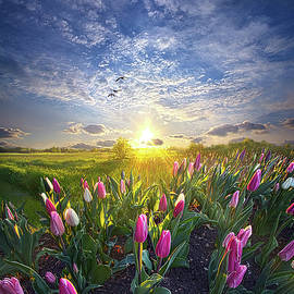 Still I Rise by Phil Koch