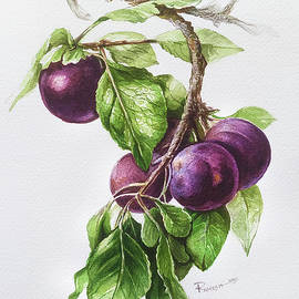 Still life of plums on a branch- pair by Ramesh Nair
