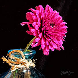 Still Life with Pom-Pom Flower by Barbara Zahno