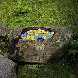 Still Water by Alida M Haslett
