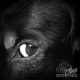 Stink Eye by Jonathan Petley