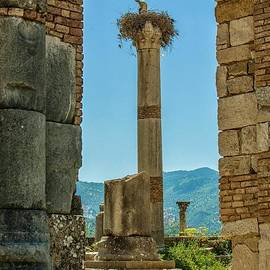 Stork with young on ancient column by Patricia Hofmeester