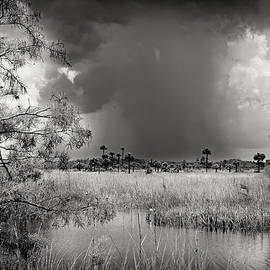 Storm over . Big Cypress -2 by Rudy Umans