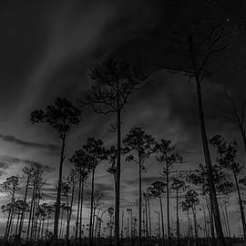 Storms in the Cypress Forest by Mark Andrew Thomas