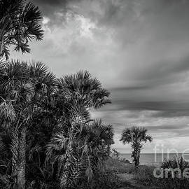 Stormy Sky at Caspersen Beach, Florida 3 by Liesl Walsh