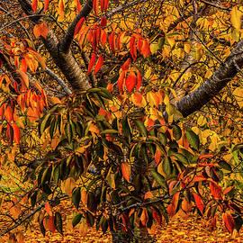 Stout Little Cherry tree by Bette Devine