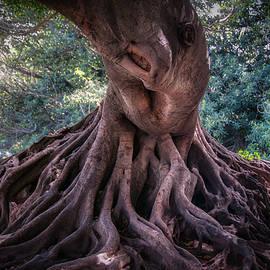 Strange Tree by Jan Fijolek