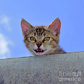 Stray kitten peering out from a gutter by Tibor Tivadar Kui