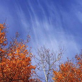 Streaks of Autumn by Mary Mikawoz