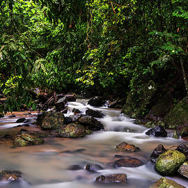 Stream in the jungles by Vishwanath Bhat