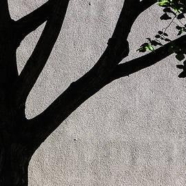 Street Tree by Hugh Warren