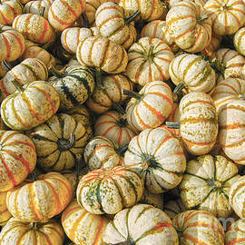 Striped Gourds by Catherine Sherman