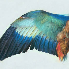 Study of Feathers by Susan Hope Finley