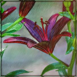 Stylized Oriental Lily Square Format by Marilyn DeBlock