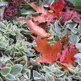 Succulents and Autumn Leaves by Barbara Ebeling