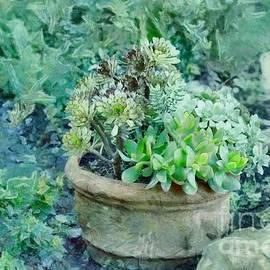 Succulents in the Garden by Eva Lechner