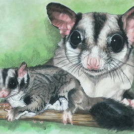 Sugar Glider by Barbara Keith