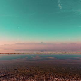 Sulfuric, the Salton Sea by Shannon Williams