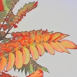 Sumac Fall Splendor 1 by Loretta S