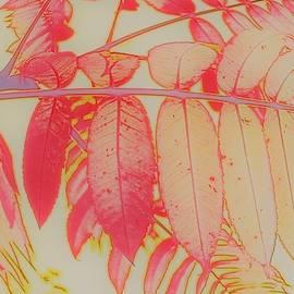 Sumac Fall Splendor 3 by Loretta S
