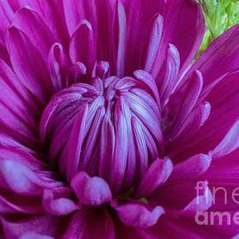 Summer Bloom by Linda Howes