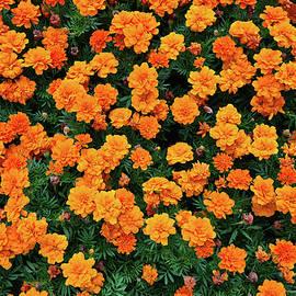 Summer colors by Jirka Svetlik