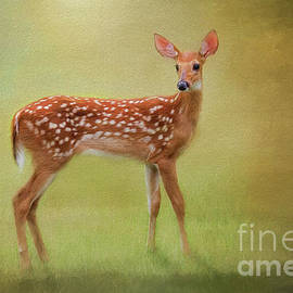 Summer Fawn Portrait by Sharon McConnell