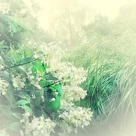 Summer Garden by Slawek Aniol