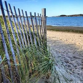 Summer Pathway by Carol Livingstone
